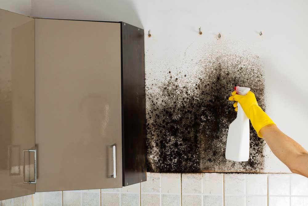 Dicas de como limpar o mofo