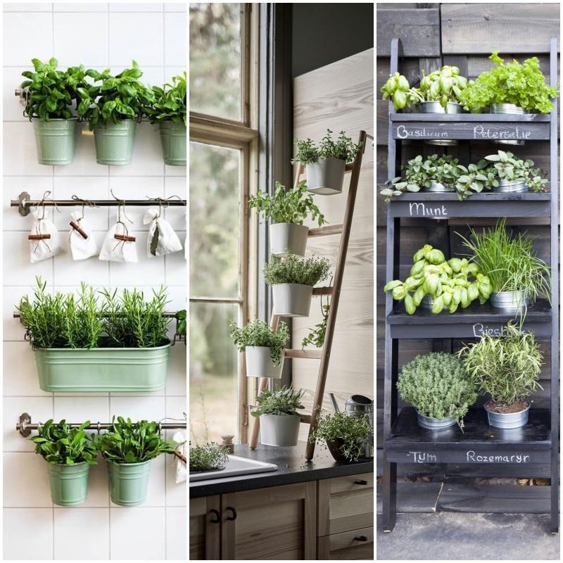 Horta em casa: 10 ideias para cultivar temperos